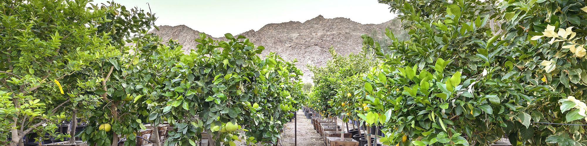 Elettrotecnica agostini vendita online irrigazione e for Materiale irrigazione